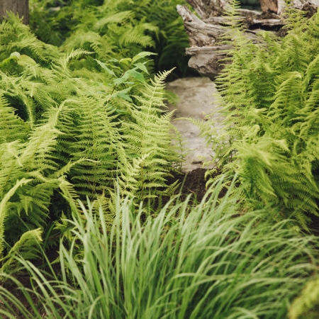 Greenscapes - Ferns